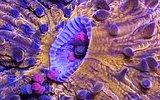 Okyanus Canlılarının Hipnoz Edici Görüntüleri
