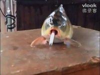 Sigarayla Balığa Eziyet Etmek