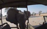 Cinnet Getiren Filin Safari Aracına Saldırması