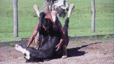Atlarla Sevişen Adam Martin Tata