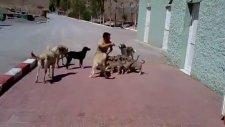 Türk Askerinin Köpek Sevgisi - Hudut Karakolu