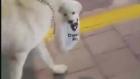Yavrusu ile Yürüyüşe Çıkan Anne Köpek