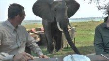 Fil Yemek Yiyen Turistlere Saldırdı