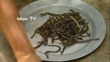 Kobra Yılanı Yiyen Adam