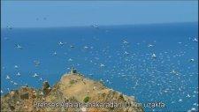 BBC Earthflight Leylek Göçü - İstanbul Çekimleri