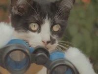 Kediler ve Zombiler Karşı Karşıya