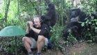Vahşi Dağ Gorilleriyle Karşılaşan Turistler