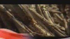 Bob Ross - Resim Sevinci - 4 (Trt 2 Dublaj)
