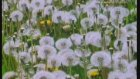 Bitkilerdeki biyolojik saat