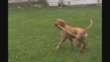 Hula Hoop Çeviren Köpek