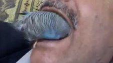 Muhabbet Kuşuna Diş Temizletmek