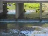 rize - derepazarı