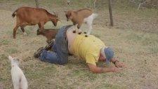 Keçi Yavrularına Sırt Çiğnetmek - Gavur Dayı