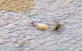 Karınca İle Arının Ekmek Kavgası