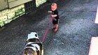 Küçük Bebeğin Hevesinden Aşırı Sıkılan 40 Kiloluk Bulldog