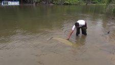 Dünyanın En Büyük Nehir Balığı - Arapayma