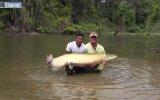 Dünyanın En Büyük Nehir Balığı  Arapayma