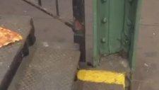 Splinter Usta Kameralara Yakalandı