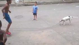 Çocuklarla İp Atlamaca Oynayan Becerikli Köpek