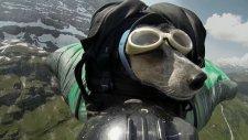 Wingsuit atlayışını yapan dünyanın ilk köpeği
