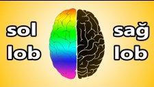 Beynimizin Hangi Kısmını Kullanırız ?