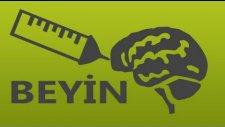 Beyninizle İlgili 20 Gerçek !