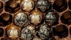 Arıların doğumunun muhteşem görüntüleri