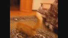 Funny Cats Compilation & Funny Cat Videos