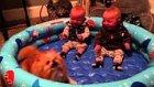 İki Ayağı Üzerinde Duran Köpeği Gördükçe Kahkahalarını Gizleyemeyen İkizler