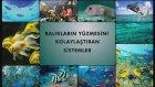 Balıkların yüzmesini kolaylaştıran sistemler