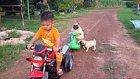 Sevimli Yavru Köpeğin Oyuncak Arabaya Binme Çabası