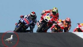 MotoGP'de İlginç Martı Kazası