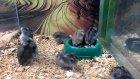 Seri Şekilde Ters Takla Atan Hamster