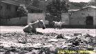 Hamiyet Yüceses - Bir İncecik Tüle Benzer - Taş Plak Kaydı