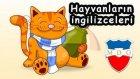 Hayvanların ingilizcesi ( ingilizce hayvanlar ) - kolay ingilizce öğren