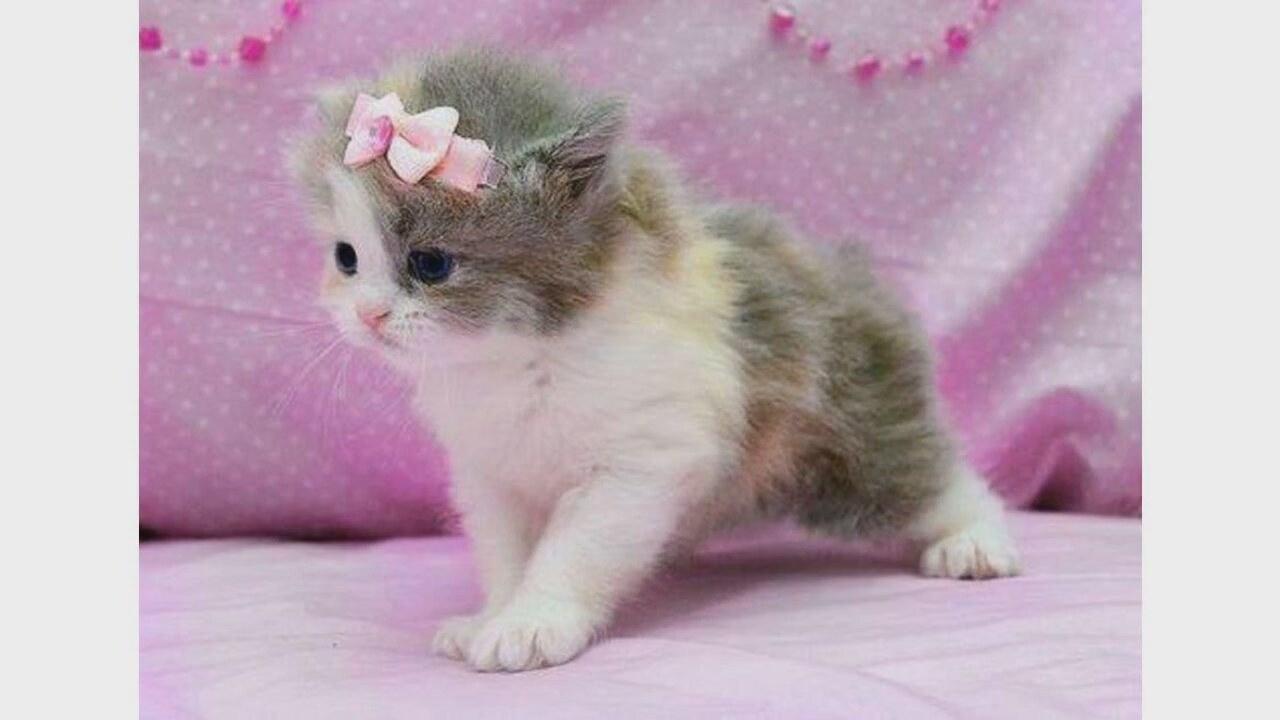 фото с котятами картинки