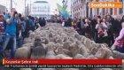 Koyunlar Şehre İndi