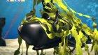 Okyanus Kaşifi Olly Uzaylı Alarmı