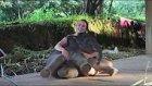 Sevimli Yavru Fil, Bakıcısına Sürpriz Yaparak Kendini Onun Şevkatli Kollarına Bıraktı