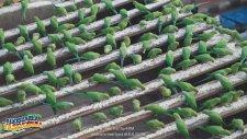 Hayatını Papağanlara Adayan İyilik Timsali Hint - Birdman