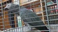 'La ilahe illallah' Diyen Papağan