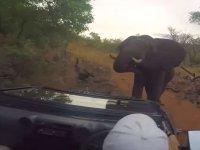 Vahşi Yaşam Fotoğrafçılarının Aracına Saldıran Kızgın Fil