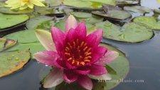 Water Lilies (Relaxing Solo Piano Music)