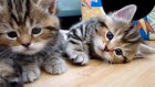 Cute Kittens tear down their home| Funny Cats