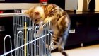 Funny Cats Thriller. Escape to Home.