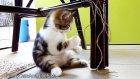 Jazz - Kitten Octavia