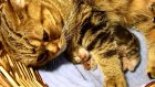 Top 10 Cat and Kittens Hugs of the first week of kittens life