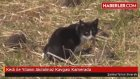 Kedi ile Yılanın Akılalmaz Kavgası Kamerada