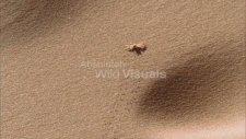 Tekerleği İcat Eden Böcek