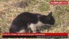 Kedi ile Yılanın Akılalmaz Kavgası